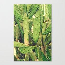 Southwest Desert Cactus Canvas Print