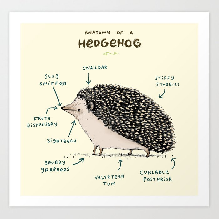 Anatomy of a Hedgehog Art Print by sophiecorrigan | Society6