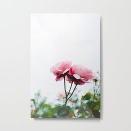 pink roses #society6 #decor #buyart Metal Print