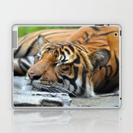 Tiger, Tiger Fast Asleep Laptop & iPad Skin