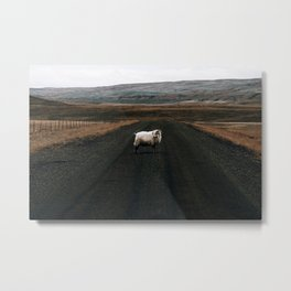 Ram Crossing II / Iceland Metal Print