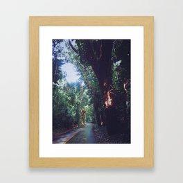 Rainforest Road Framed Art Print