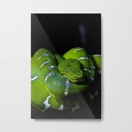 Emerald Boa Metal Print