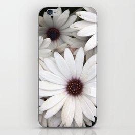 Daisies, Keukenhof, Holland iPhone Skin