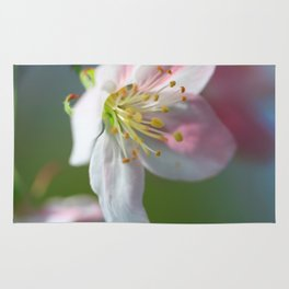 Apple Tree Blossoms In Spring Rug