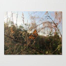 Brooker Creek Butterfly Canvas Print