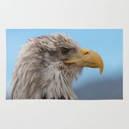 White Headed Eagle Portrait. Rug