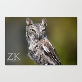 Young Owl Canvas Print