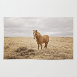 Solitary Horse in Color Rug