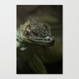Philippine Sailfin Lizard Canvas Print