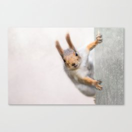 Squirrel - Who are you? Canvas Print