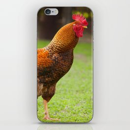 portrait Rhode Island Red rooster iPhone Skin