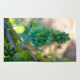 Sauvignon Blanc Grapes on the Vine Rug