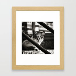 Animals 01 Framed Art Print