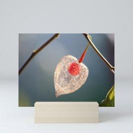 Japanese Lantern Flower Fruit Close up Mini Art Print