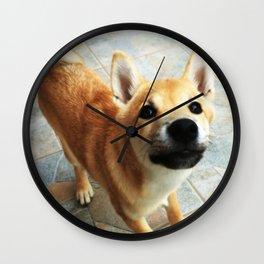 Shiba Inu Wall Clock