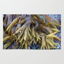 Seaweed bladders -  Bladder wrack  Rug