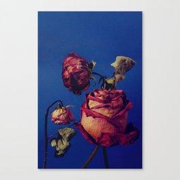 Rose III Canvas Print