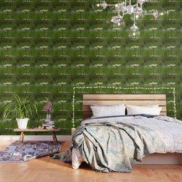 Bela rada Wallpaper