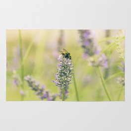 A bee on the lavender Rug
