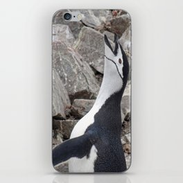 Chinstrap Penguin Calling iPhone Skin