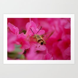 bumble bee moth Art Print