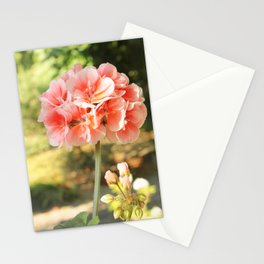 Morning Bloom Stationery Cards