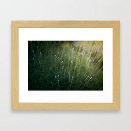Blooming Lavender Framed Art Print