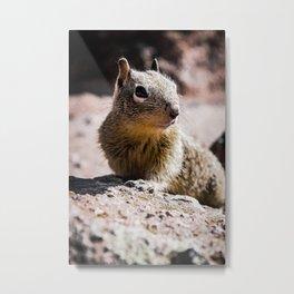 Squirrel on the Rocks Metal Print