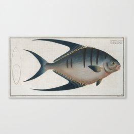 Vintage Illustration of a Palometa Fish (1785) Canvas Print