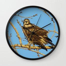 Redtail Hawk Wall Clock