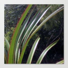 Sunlight Strikes the Screw Pine Canvas Print