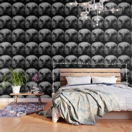 Black and white bald eagle Wallpaper