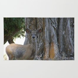 Mule-tail Deer, Buck in Velvet Rug
