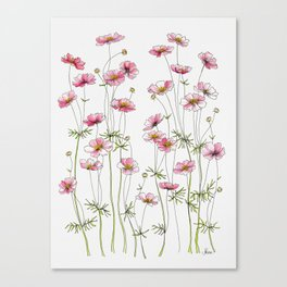 Pink Cosmos Flowers Canvas Print