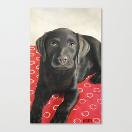 A chocolate Lab called Tana Canvas Print