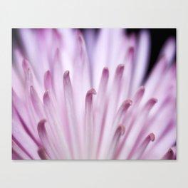 Thin Pink Petals Canvas Print