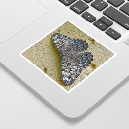 Turquoise and Sand Butterfly by Teresa Thompson Sticker