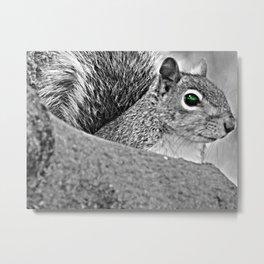 Green Eye Squirrel Metal Print