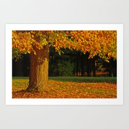 Orange Maple Art Print
