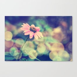 Romance. Golden dust pink daisy with bokeh. Canvas Print