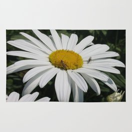 Close Up Common Daisy with Winged Insects Rug