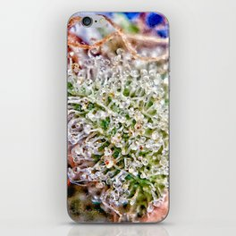 Skywalker OG Kush Strain Frosty Buds Calyxes Trichomes Close Up View iPhone Skin