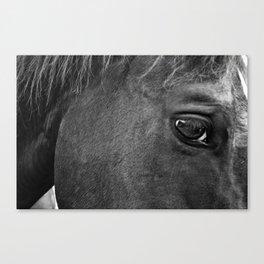 A Horse Named Cricket Canvas Print