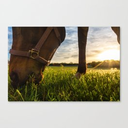 Grazig at Sunst Canvas Print