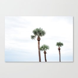 St. Simons Island Palm Trees Canvas Print