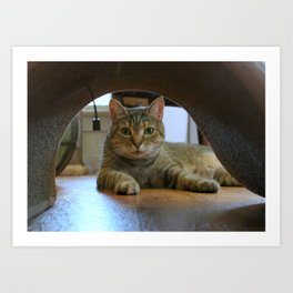Mouse-eye View of Cat Art Print