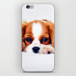 Cavalier King Charles iPhone Skin
