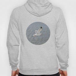 Seagull, bird,  Hoody