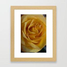 The Yellow Rose Framed Art Print
